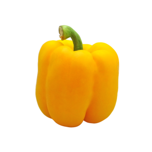 Capsicum – Yellow