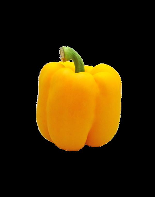 Capsicum – Yellow